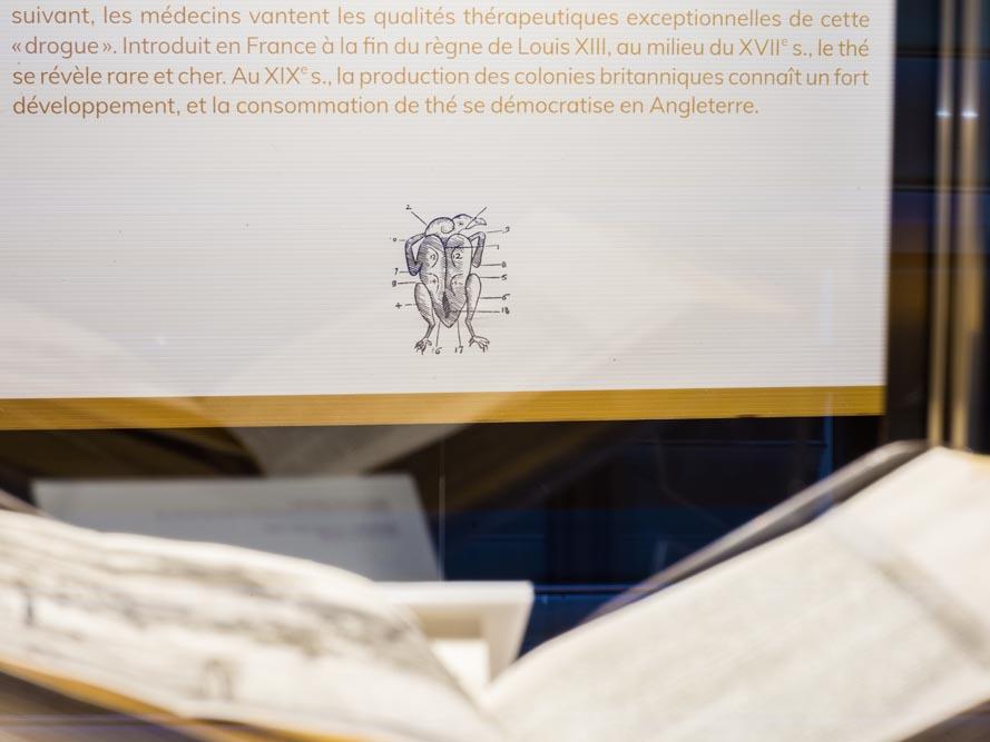 exposition_a_la_table_du_patrimoine_scenographie_graphisme_vincent_boutin (14)